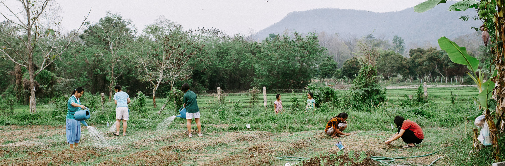 A group of people farming
